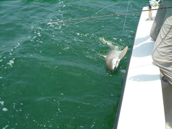 Off The Hook Fishing Charters: shark