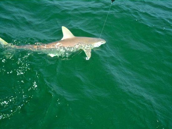 Manta ray picture of off the hook fishing charters for Off the hook fishing charters