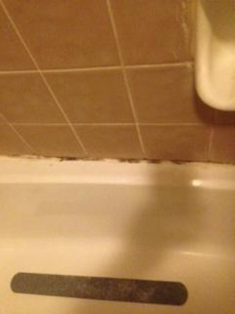 Motel 6 St Paul I-94: Shower Mold
