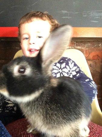 Easton Farm Park: Stroking bunnies!