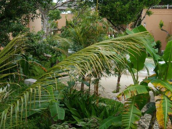 Medina Palms : Green