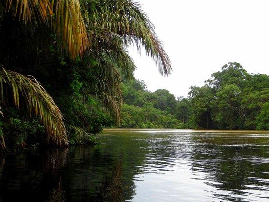 Parque Nacional Tortuguero: Canals