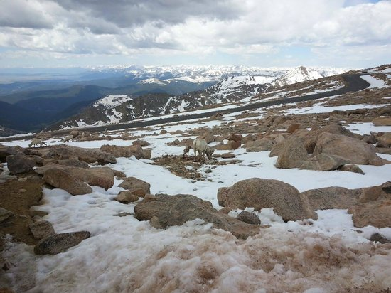 Mount Evans Scenic Byway: Near the Summit