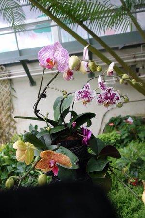 Hong Kong Park: Conservatory