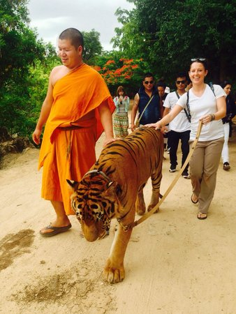 Tiger Temple ( Wat Pa luang Ta Bua) : My favorite part was walking the tiger!