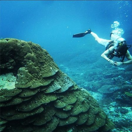 Adventure Scuba Diving Bali: Aussie Will is about ten feet tall so you know this coral thingy is huge.