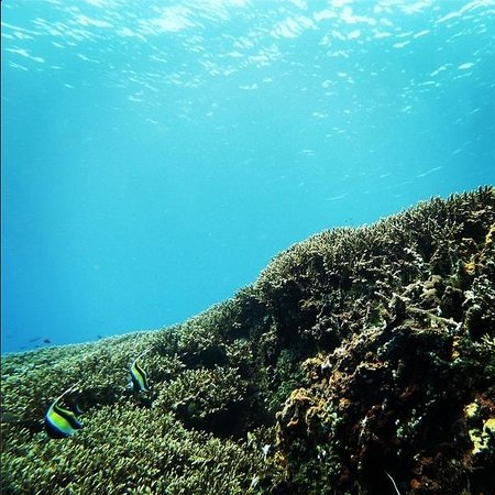 Adventure Scuba Diving Bali: Nusa Penida, S.D. Point.