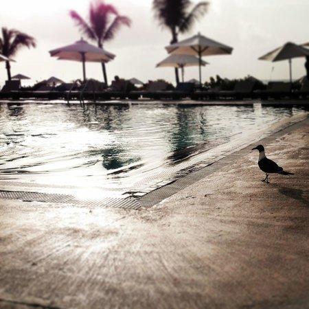 Club Med Columbus Isle : couché de soleil autour de la piscine