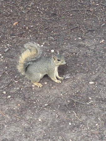 State Capitol : squirrel in the garden
