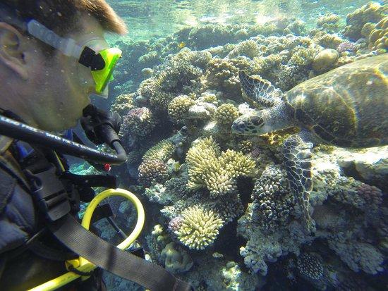 6 picture of reef oasis dive club sharm el sheikh - Reef oasis dive club ...
