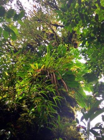 Hotel Fonda Vela: Nature