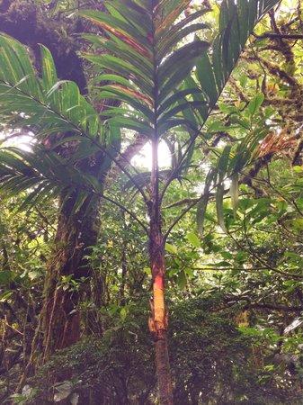 Hotel Fonda Vela: Palm