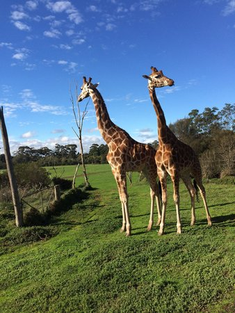 Werribee Open Range Zoo: 2