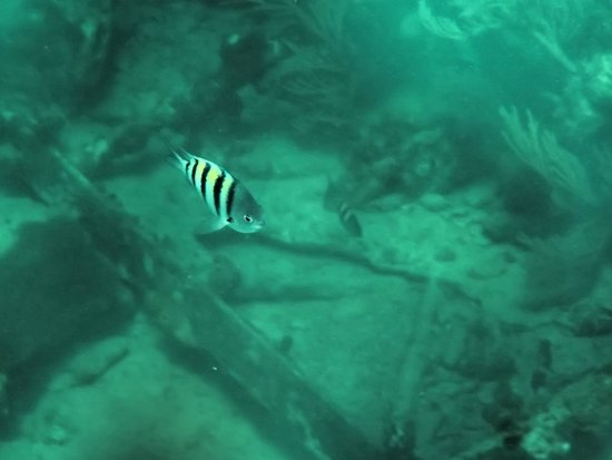 Memories Paraiso Beach Resort: Fish in the water above a shipwreck while snorkeling!