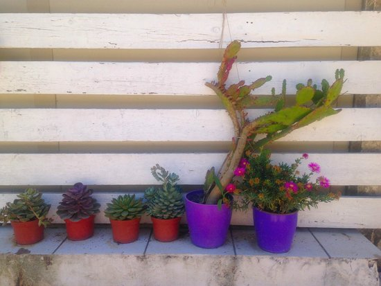 Residence Solemare : beautiful plants and cacti