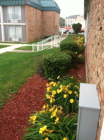 Red Roof Inn & Suites DeKalb: Near pool