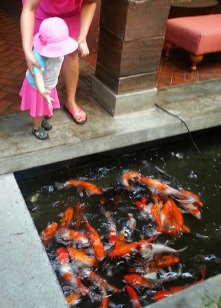 Colombo Court Hotel & Spa : Feeding fish in lobby
