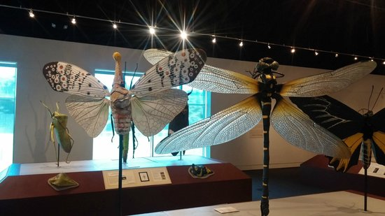 """Delaware Museum of Natural History : """"BUGS"""" Exhibit"""