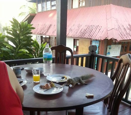 Redang Holiday Beach Villa: Squirrel on the table