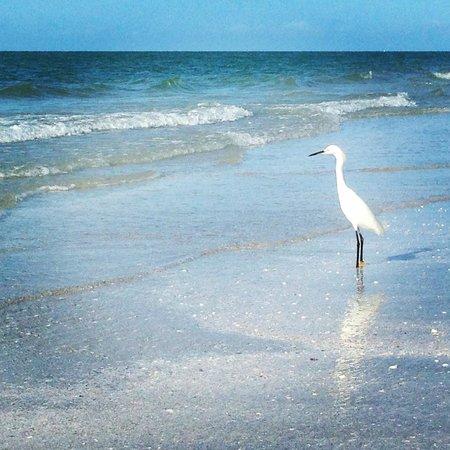 Holiday Inn Sanibel Island: The beach