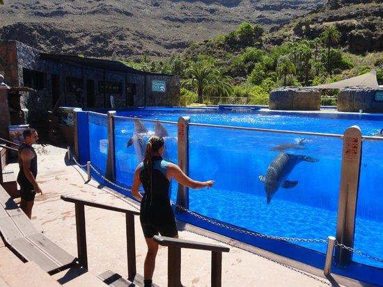 Palmitos Park: Delfinarium