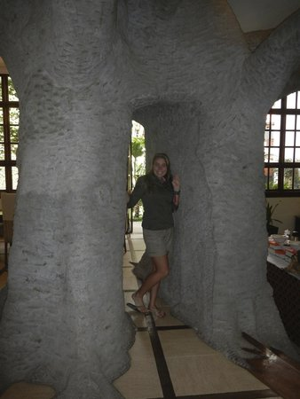 The African Tulip : Baobab tree in dining room