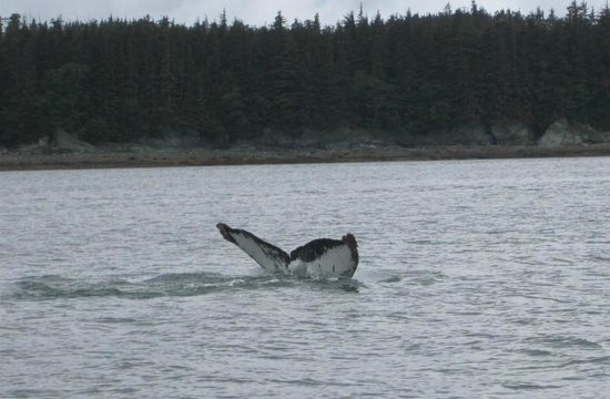 Weather Permitting Alaska - Whale Watching: Sasha (AK) came by to say hello.