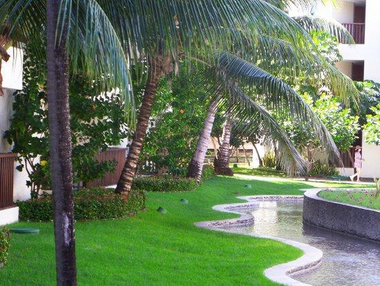 Marulhos Suítes Resort : coqueiros