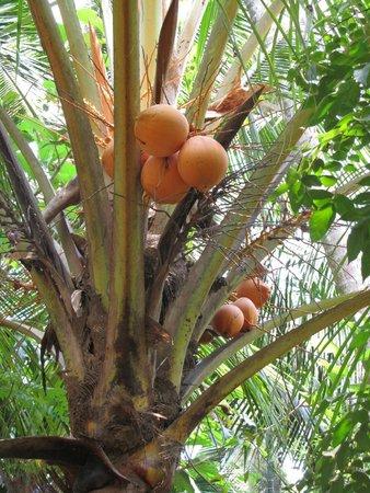 Hotel Astoria : Чудесные райские фрукты