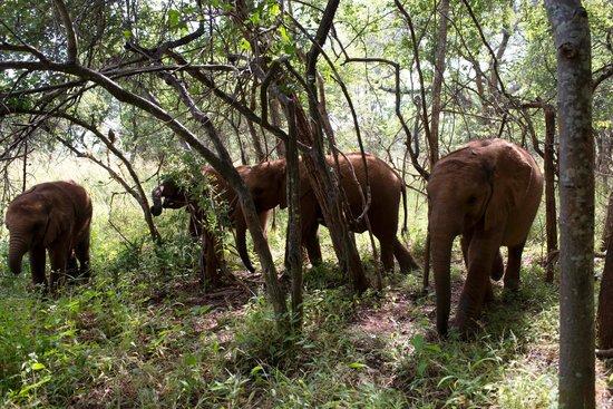 Lilayi Lodge: The Elephant Orphanage Project