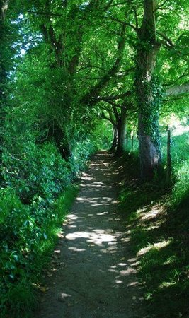 Bindon Bottom B&B: The Walking Path to Lulworth Cover