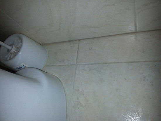 Laguna Park 1: Rug of pibic hair behind toilet