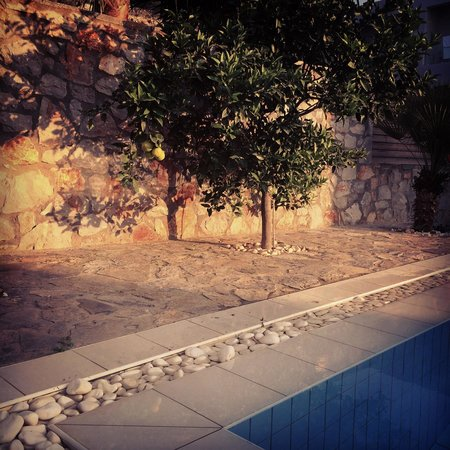 Royal Heights Resort: lemon tree by our private pool