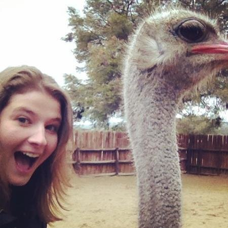 Safari Ostrich Show Farm: ostrich selfie