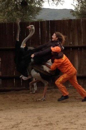Safari Ostrich Show Farm: ostrich ride