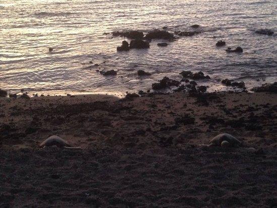Anaehoomalu : 2 turtles sleeping at the beach