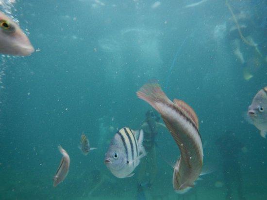 Ocean Adventures Bavaro Splash: Fish