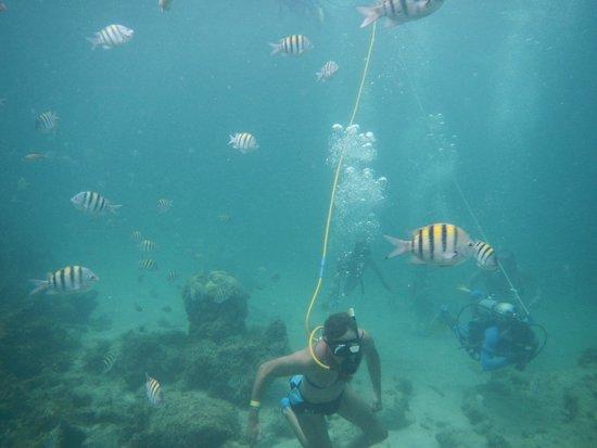Ocean Adventures Bavaro Splash: Snuba diving