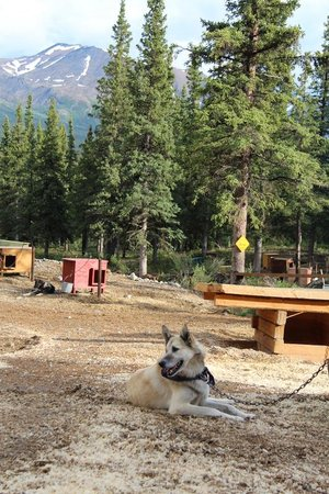 Husky Homestead: Jeff is great!