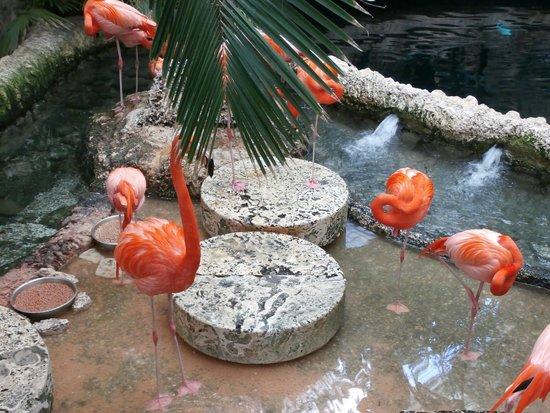 Dallas World Aquarium: Pink flamingo exhibit