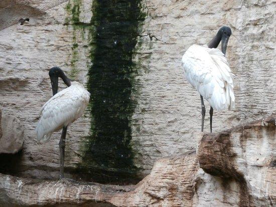 Bird Exhibit Picture Of Dallas World Aquarium Dallas