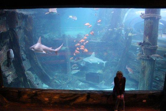 Sea Life Melbourne Aquarium: shark tank