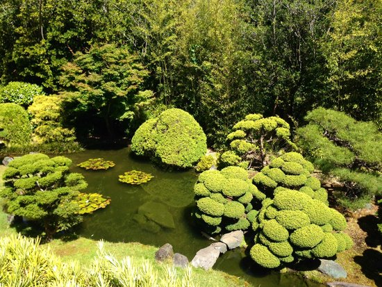 Japanese Tea Garden : Garden view