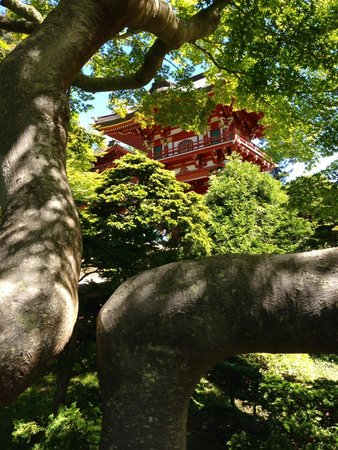 Japanese Tea Garden : Pagoda view