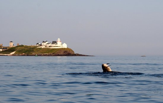 Ocean Escapes: dolphin off Roches Point