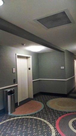 La Quinta Inn & Suites Columbus - Edinburgh : Elevator (hallway)
