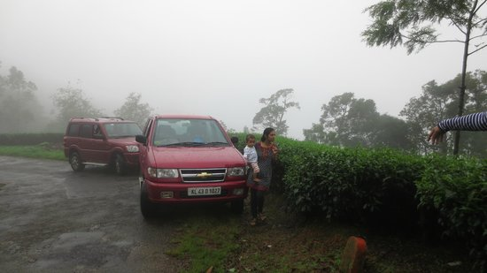 Rain Forest Homestay: Surrounded by tea plantations - a misty morning view on way to Rain forest