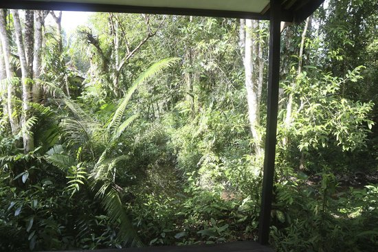 Rimba Orangutan Eco Lodge: Rainforest at Rimba Ecolodge