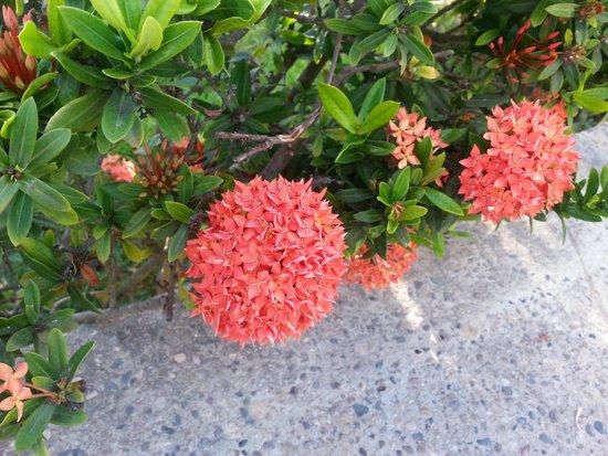 El Cid El Moro Beach Hotel: beautiful flowers