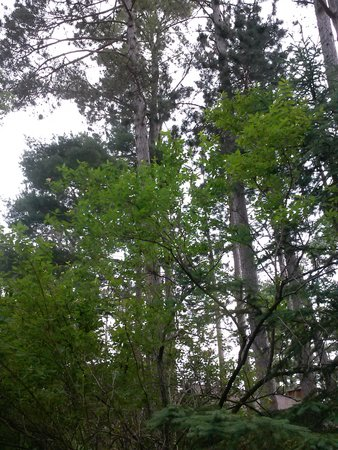 Elbert's Resort and Condos : beautiful grounds beach access and trees,tr